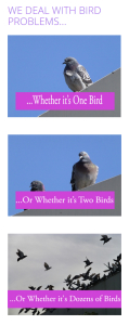 Bird Pest Control Service Orange County CA